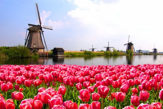Tulpės Olandija