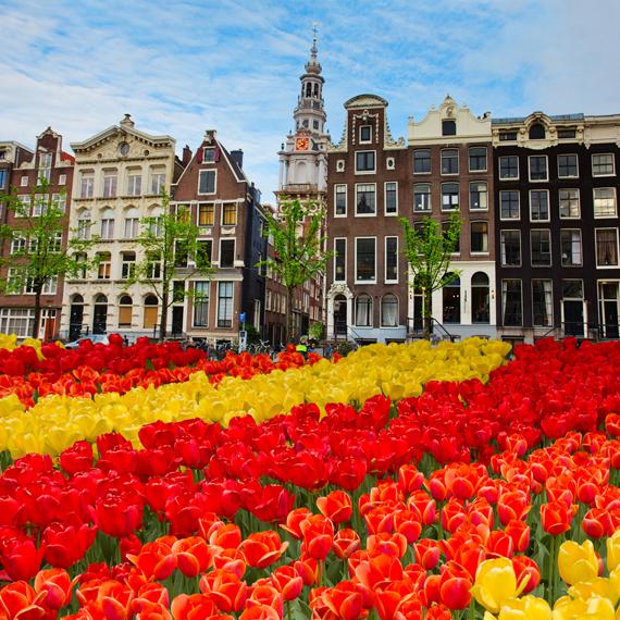 Tulpių žydėjimas, Amsterdamas