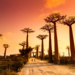 Baobabų alėja, Madagaskaras