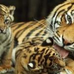 kampelis gyvūnų mylėtojams